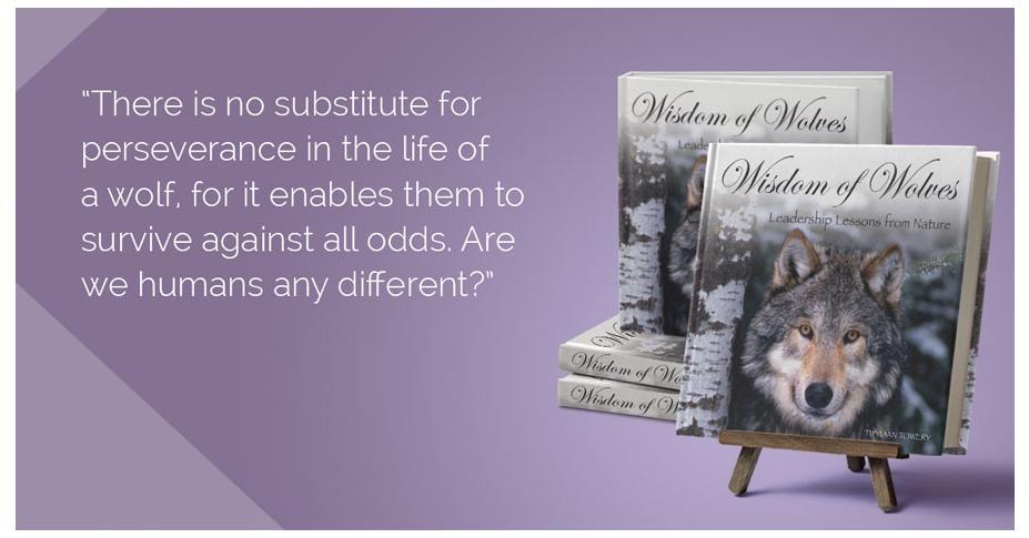 Wisdom of Wolves: Attitude